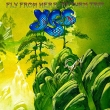 Yes - Fly From Here Return Trip